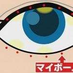 目の油を分泌マイボーム腺